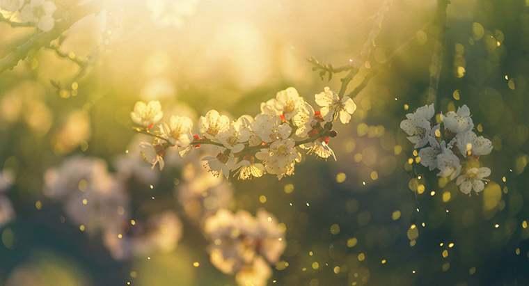 How to Beat Seasonal Allergies this Summer